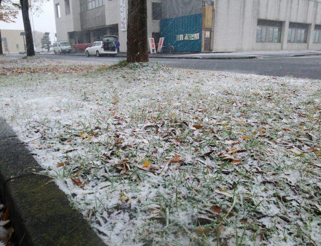 今日の鹿角は昼前がら雨が雪さ変わったす。