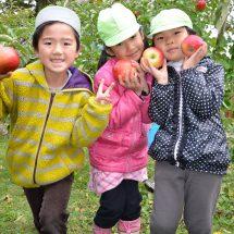 先週末、市内の保育園児どごよばって市役所前さあるりんごのもぎ取りやったす。