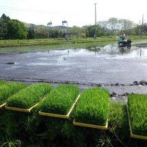 昨日、今日と天気もいくてさがり田植えやってらす。
