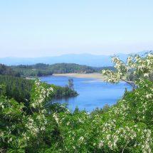 尾去沢を山の方さ行ったどごろででっけえ池見えだす。