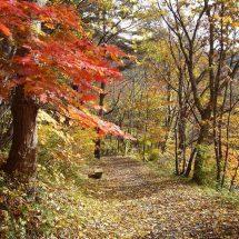 湯瀬渓谷の散策路が全部あるげるぐなったす。