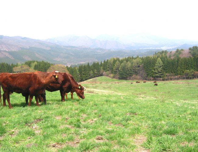 かづの牛のいろんた食べ方を試してらっす